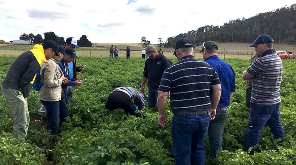 Chinese delegation that recently toured the Creswick potato growing area