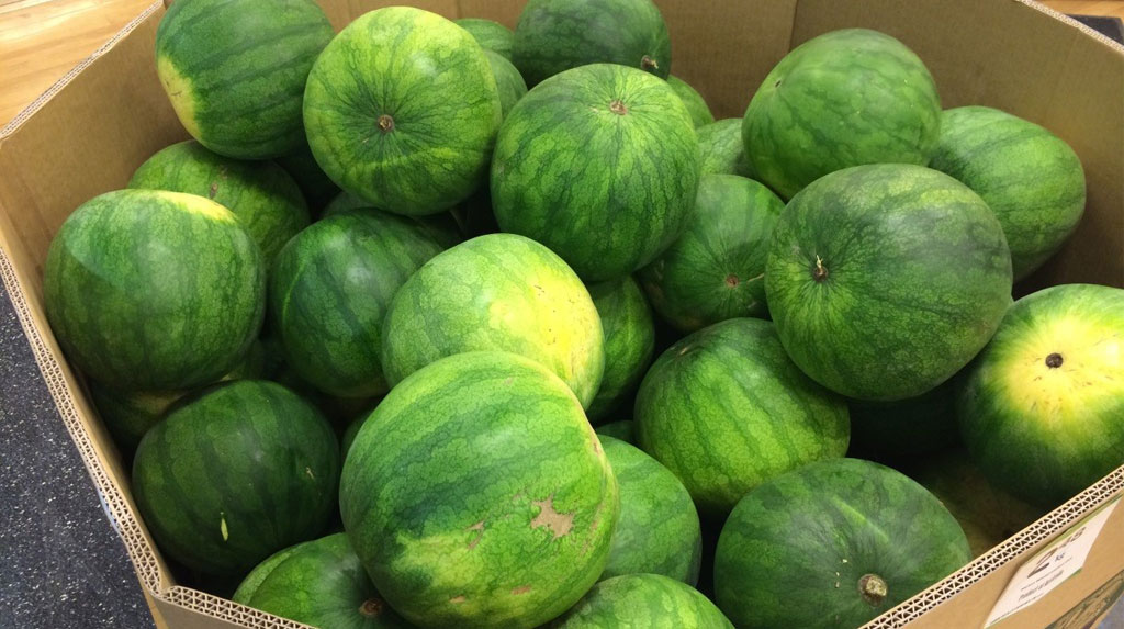 Raider: Keep an eye out for this little gem at your local supermarket and be sure to take one home. Notice the mottled stripe which is characteristic of this variety.