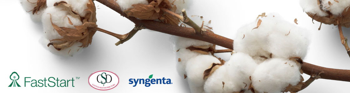 Faststart cotton with CSD and Syngenta