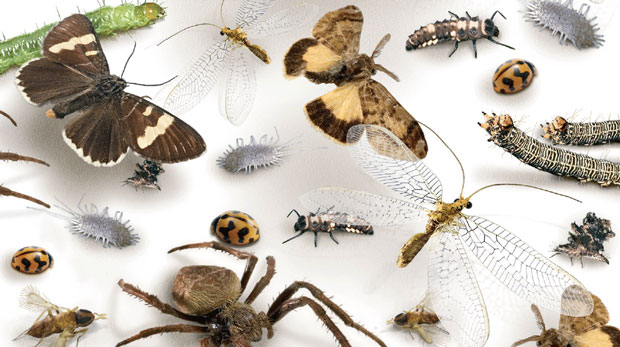 Good, bad and ugly insects