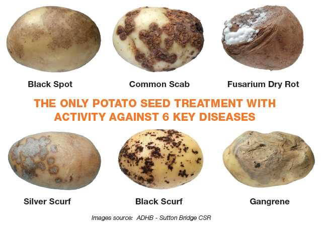 Potato seed treatment with six diseases