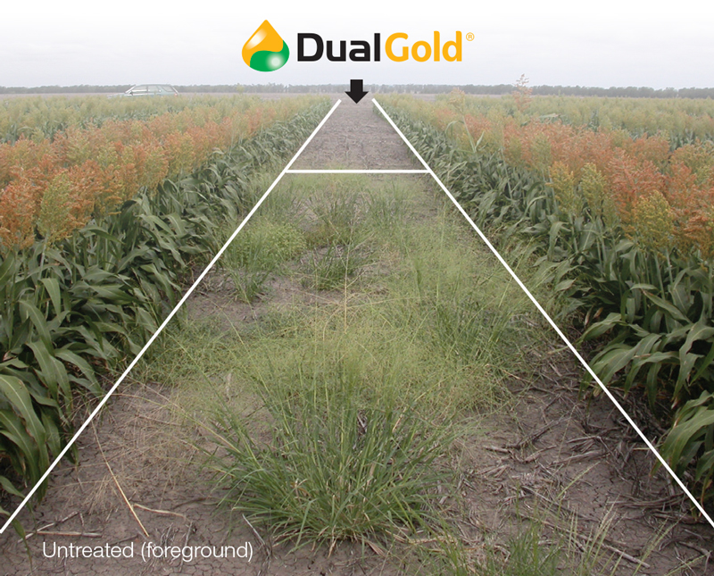 Dual Gold applied vs untreated