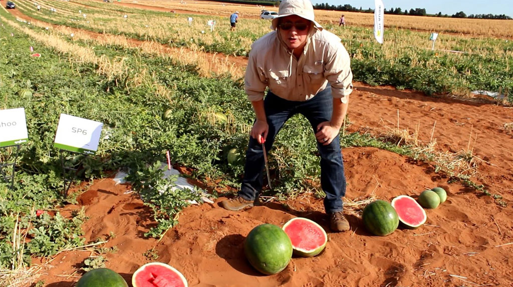 Matt Kinkade, Watermelon Breeder
