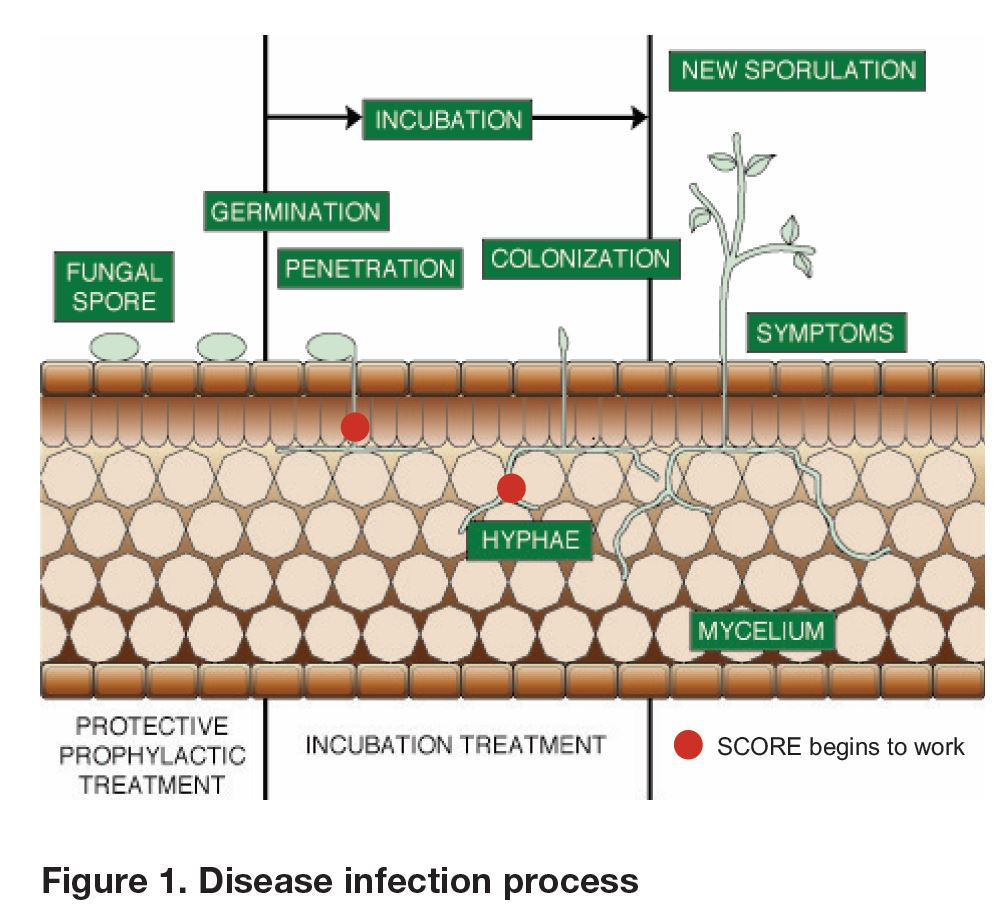 Disease Infection Process