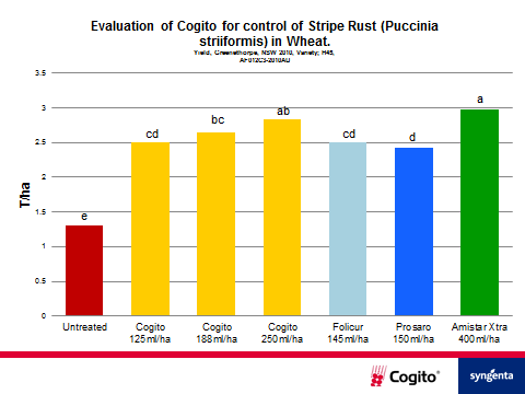 In registration trials, COGITO demonstrated it could reduce the severity of Stripe Rust from 92 per cent (untreated) to 25 per cent at 250mL/ha with more than double the yield.