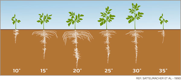 potato-root-growth-visual_yara-fertilisers