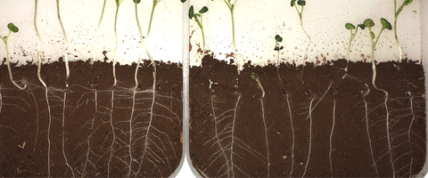 Syngenta has developed SALTRO® DUO to pythium and stem canker