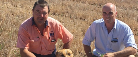 (L to R) Barley grower, Gary Weston, with his agronomist, Dave Strahorn from Delta Agribusiness, out Gary's Curban property.
