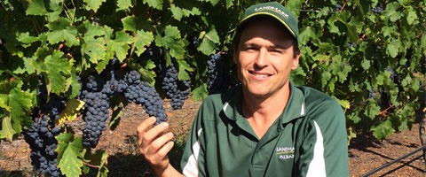 Landmark Great Southern WA agronomist, Steve Poole, said the use of Switch as a central part of the botrytis spray program has delivered very good prevention against botrytis attack in a difficult season.