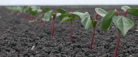 Syngenta and Cotton Seed Distributors will send the winners of the FastStart Cotton Establishment Awards on an expenses-paid trip to Western Australia