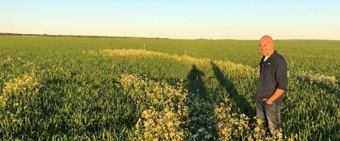 Syngenta has lodged an application for the registration of a pre-emergent selective herbicide CALLISTO™ for use on Australian wheat and barley crops.