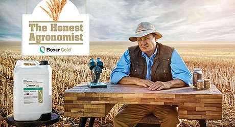 The Honest Agronomist - Boxer Gold