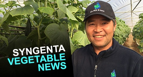 Syngenta Vegetable News