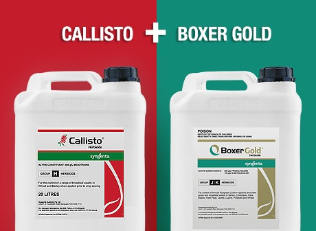 Callisto and Boxer Gold teaser