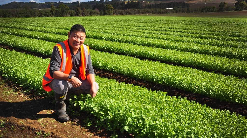 """Vegetable grower Allan Fong provides niche products to a """"foodie"""" market, and takes his product stewardship very seriously."""