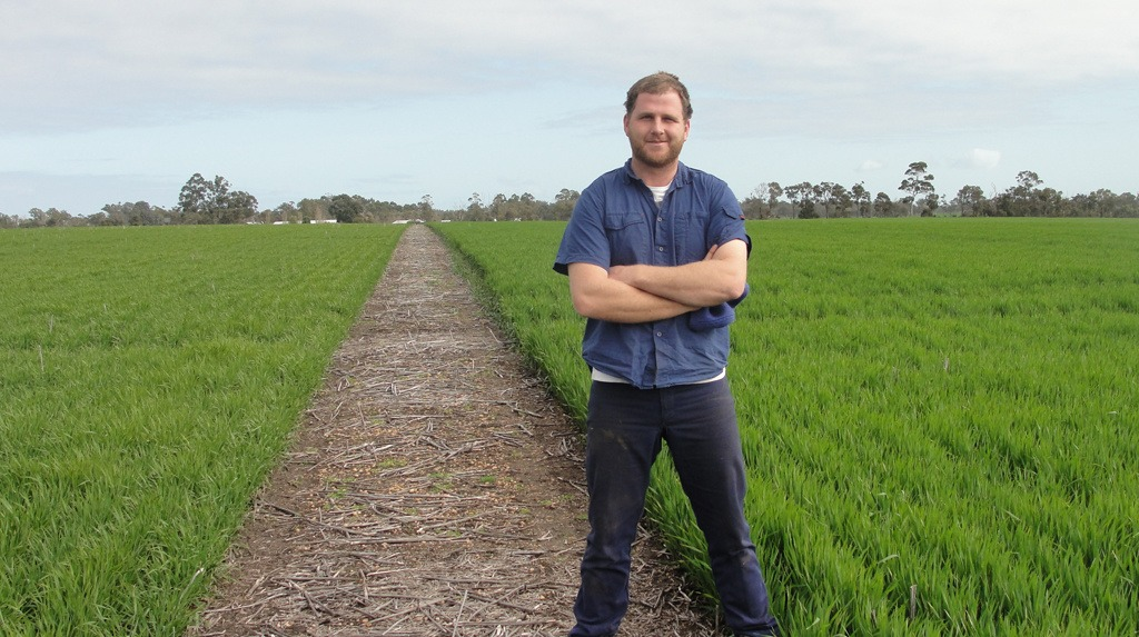 Mount Barker farmer, Andrew Slade with two new barley varieties he has grown commercially this season. On the left is Flinders, a high yielding export malting barley with superior malting characteristics and improved malt extract levels over Baudin.