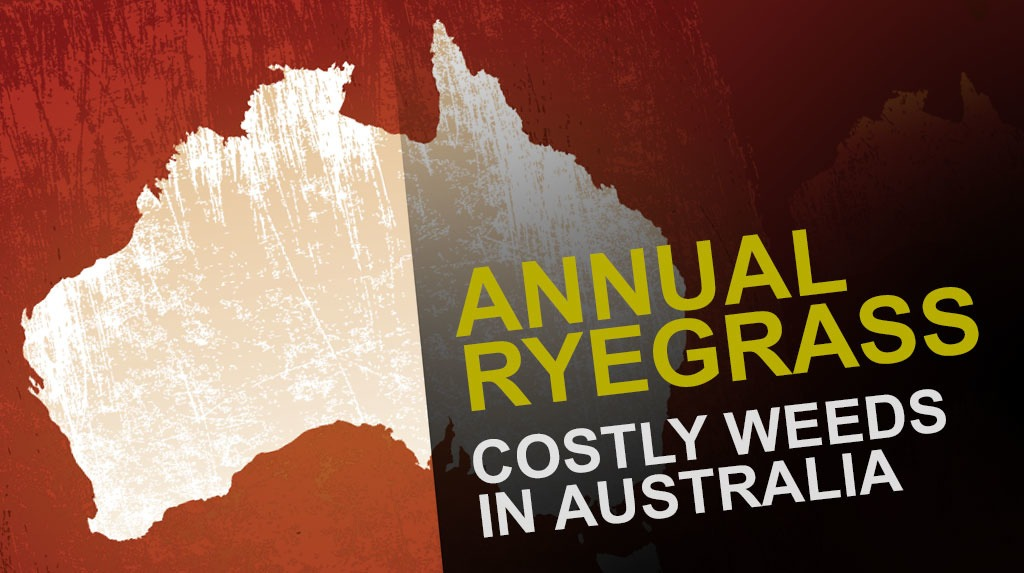 Annual Ryegrass in Australia
