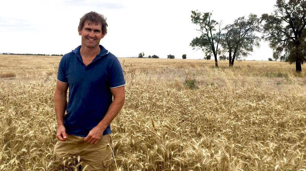 Cereal grower, Ben Batters in his crop treated with AXIAL for control of Wild Oats.
