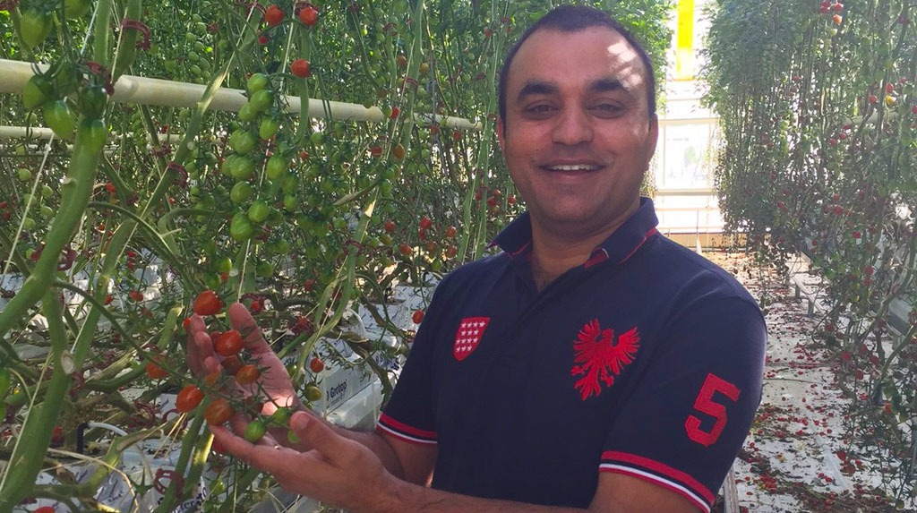 Naresh Singh, head grower with D'VineRipe, has achieved world best yields in a number of varieties of tomatoes.