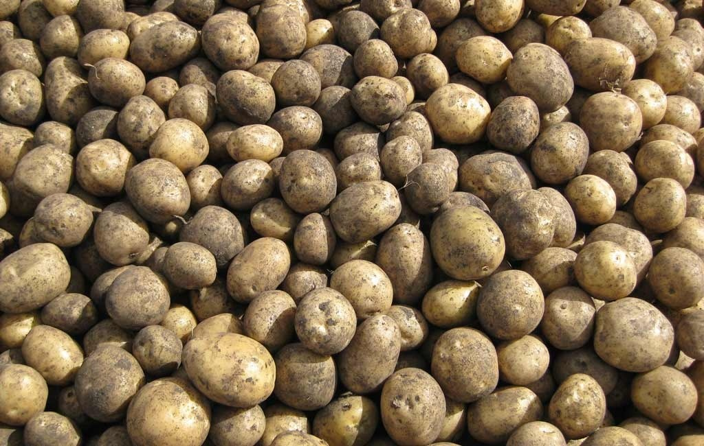 Vibrance Premium® from Syngenta offers superior control over those key diseases the potato industry faces.
