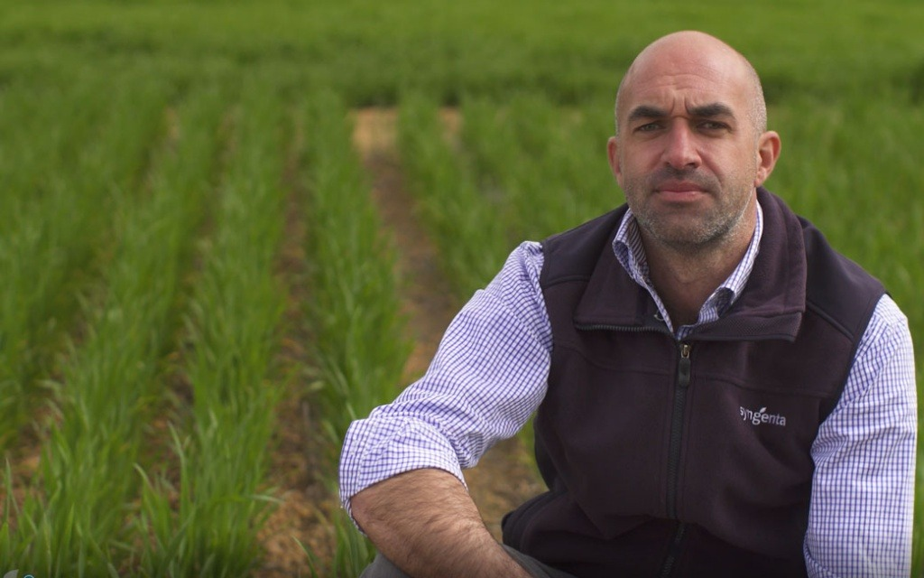 Living Farm trial shows Syngenta Seedcare product Uniform is a specialist in Rhiizoctonia control.