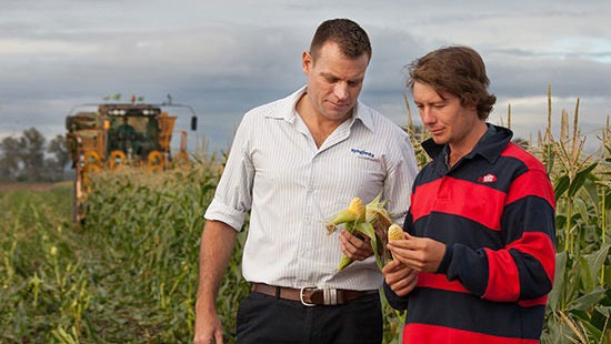 two men looking at corn