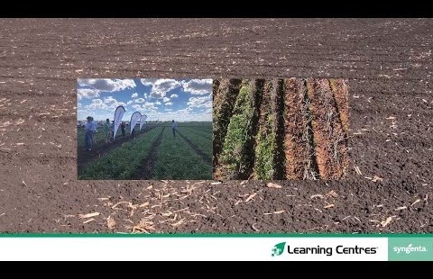 Learning Centres 2020 | Tosari sowing countdown
