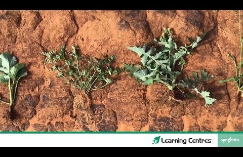 Learning Centres | Wagga Wagga Episode One