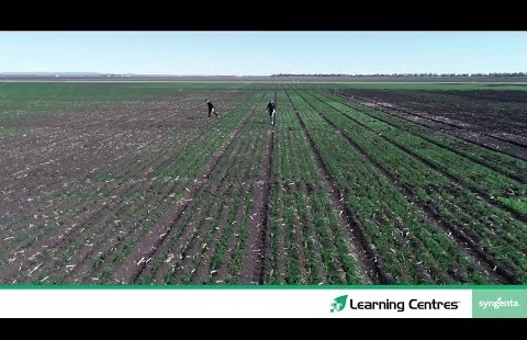 Seedcare™ treatment for Crown rot under trial