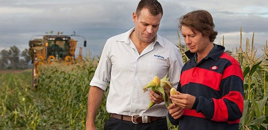 Syngenta-with-corn-grower